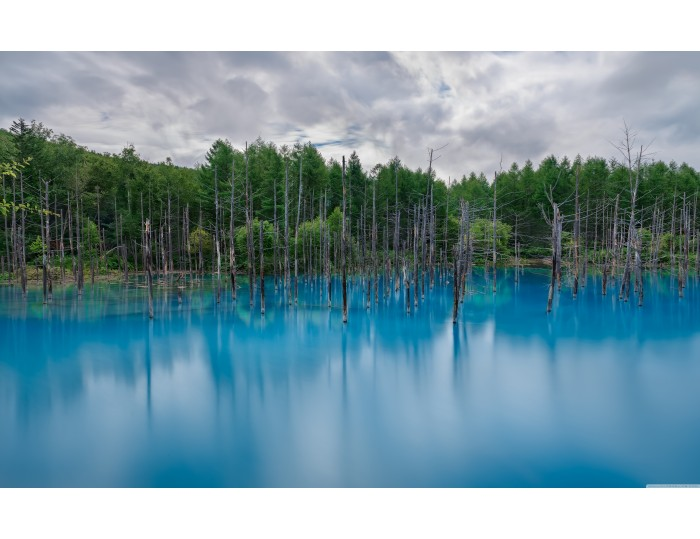 Tablou canvas copaci - natura cod 0001