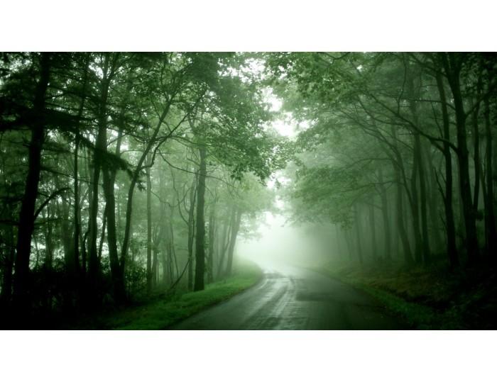 Tablou canvas copaci - natura cod 0011