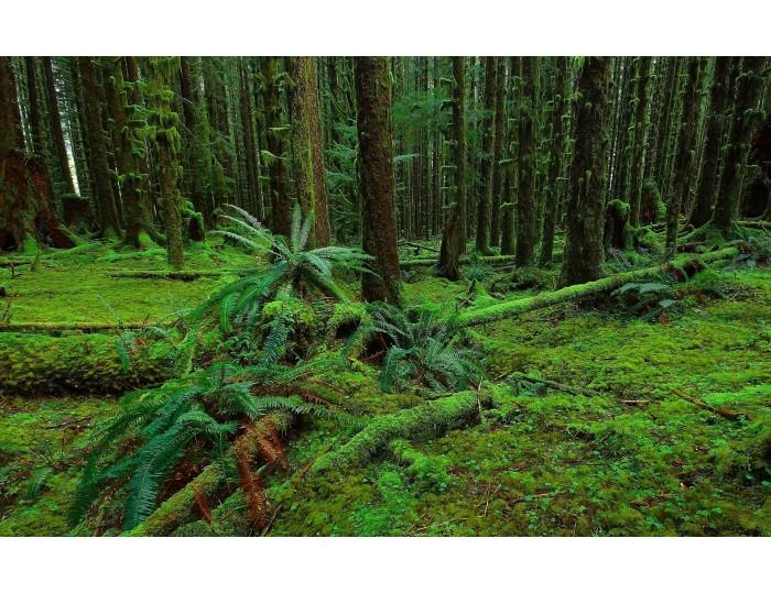 Tablou canvas copaci - natura cod 0012