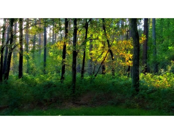 Tablou canvas copaci - natura cod 0015