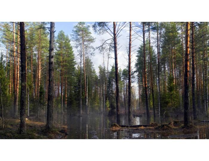 Tablou canvas copaci - natura cod 0017