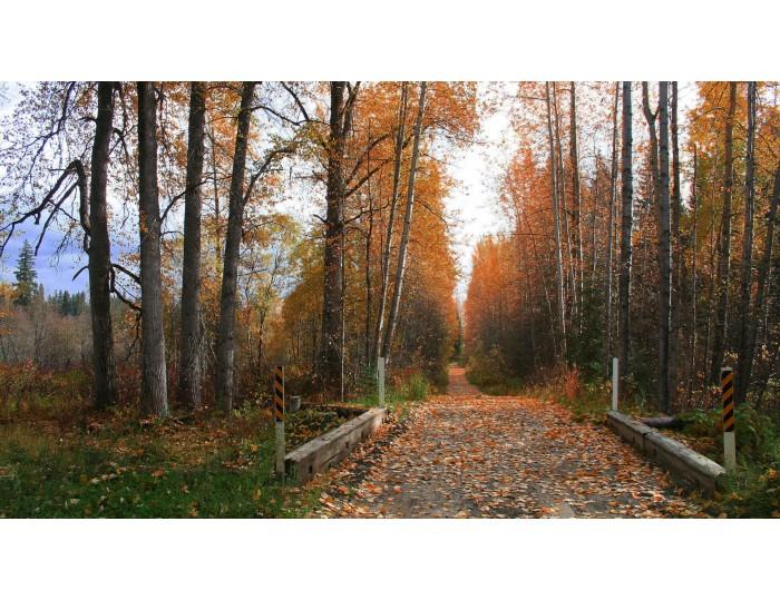 Tablou canvas copaci - natura cod 0002