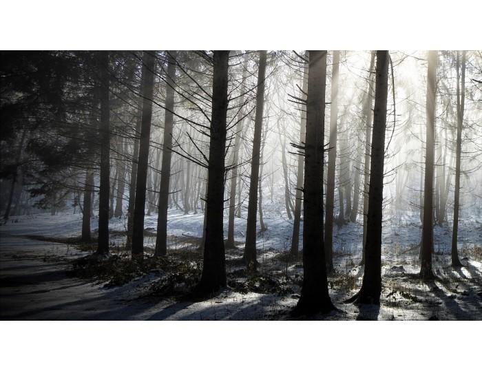 Tablou canvas copaci - natura cod 0020
