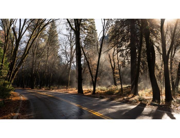 Tablou canvas copaci - natura cod 0021