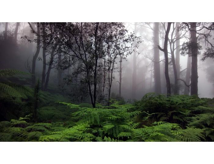 Tablou canvas copaci - natura cod 0023