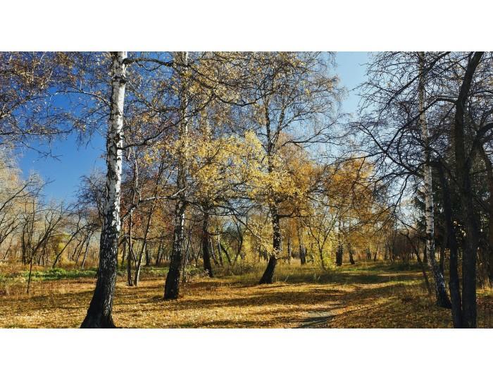 Tablou canvas copaci - natura cod 0024