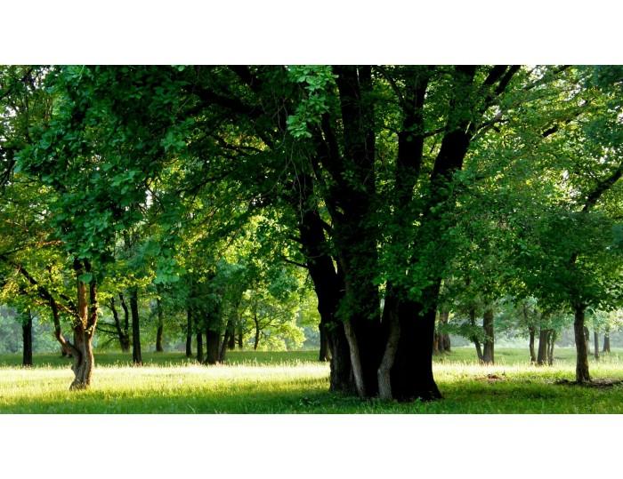 Tablou canvas copaci - natura cod 0025
