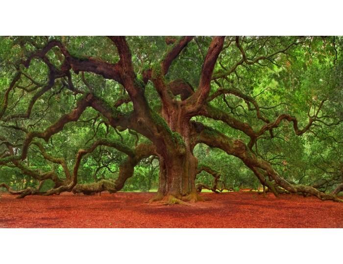 Tablou canvas copaci - natura cod 0029