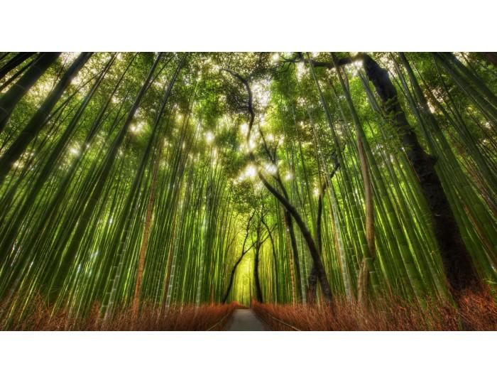 Tablou canvas copaci - natura cod 0030