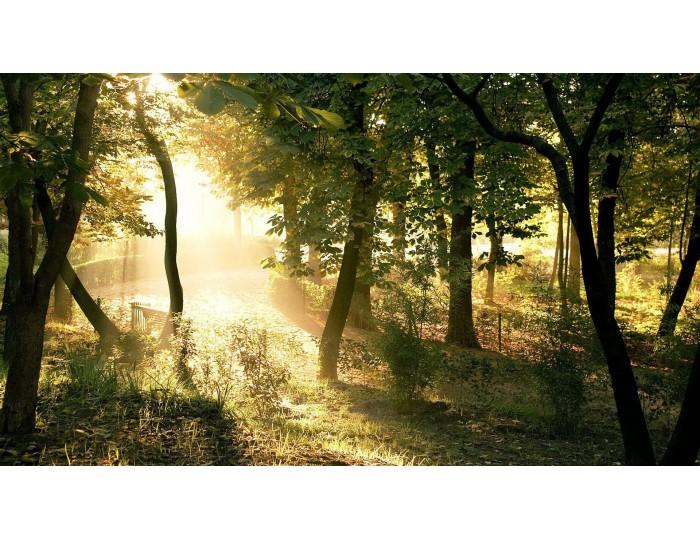 Tablou canvas copaci - natura cod 0031