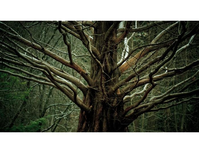 Tablou canvas copaci - natura cod 0032