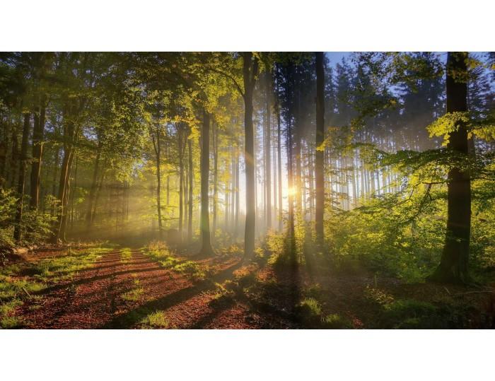 Tablou canvas copaci - natura cod 0038