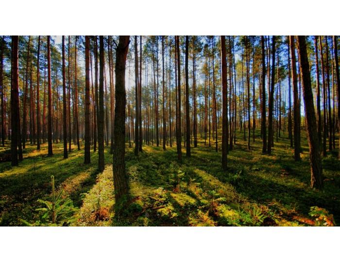 Tablou canvas copaci - natura cod 0041