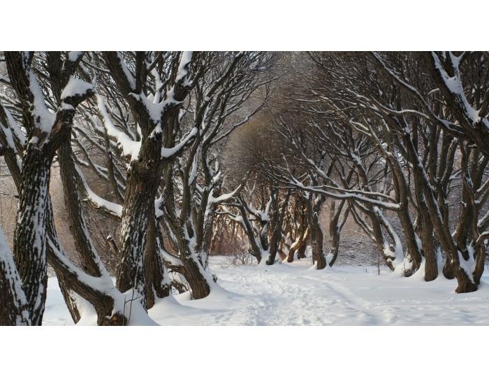 Tablou canvas copaci - natura cod 0042