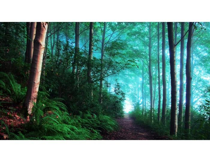 Tablou canvas copaci - natura cod 0007