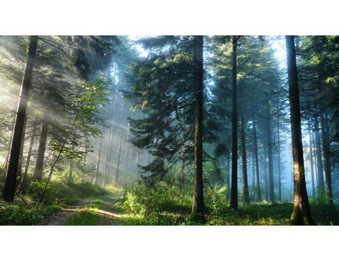 Tablou canvas copaci - natura cod 0008