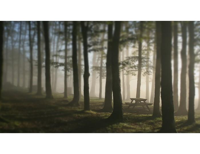 Tablou canvas copaci - natura cod 0009