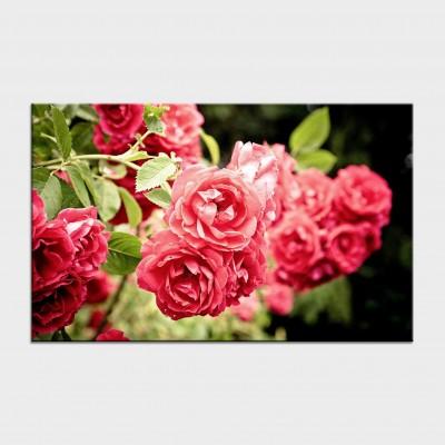 Tablouri cu flori cod flo-3