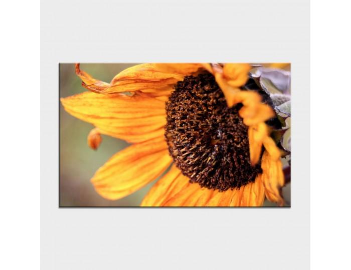 Tablouri cu flori cod flo-6
