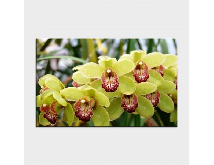 Tablouri cu flori cod flo-9