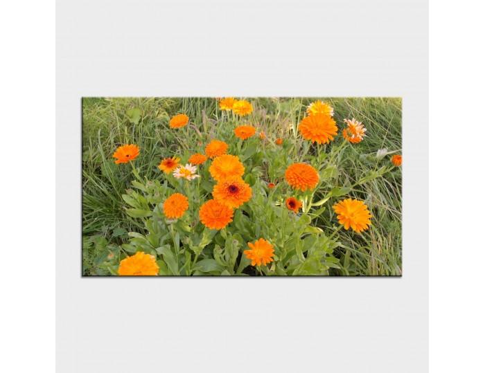Tablouri cu flori cod flo-10