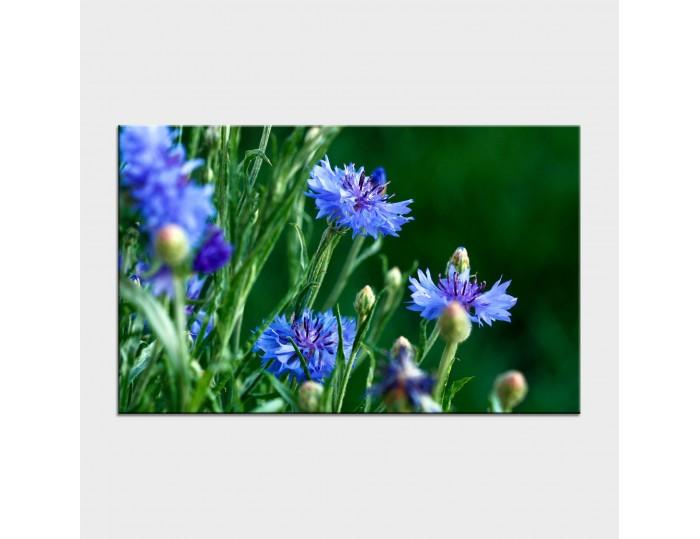 Tablouri cu flori cod flo-11