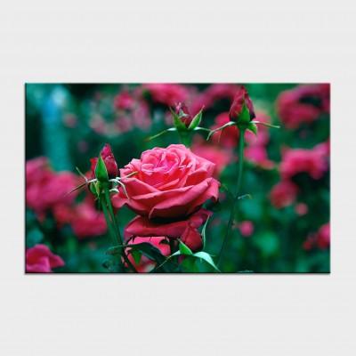Tablouri cu flori cod flo-13