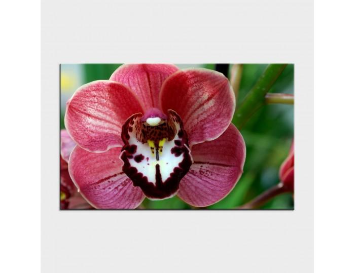 Tablouri cu flori cod flo-14