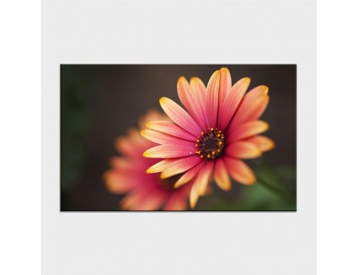 Tablouri cu flori cod flo-15