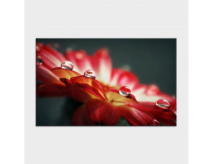 Tablouri cu flori cod flo-16