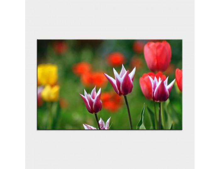 Tablouri cu flori cod flo-18