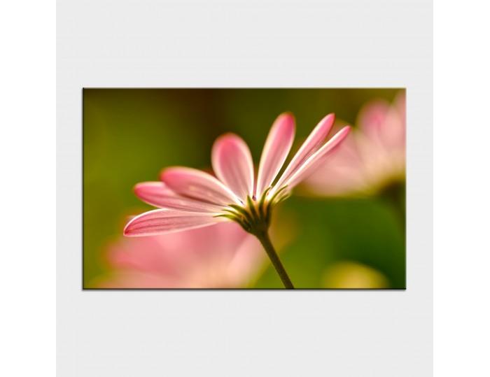 Tablouri cu flori cod flo-23