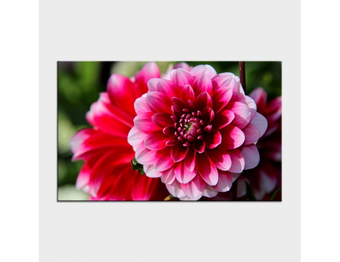 Tablouri cu flori cod flo-29