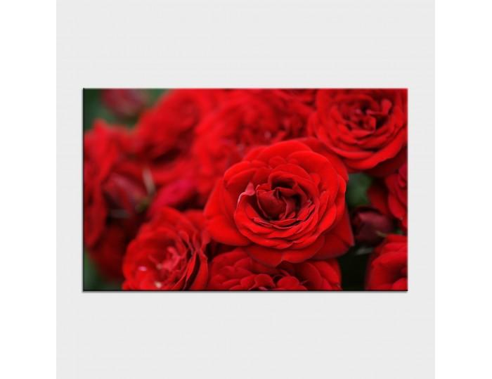 Tablouri cu flori cod flo-31