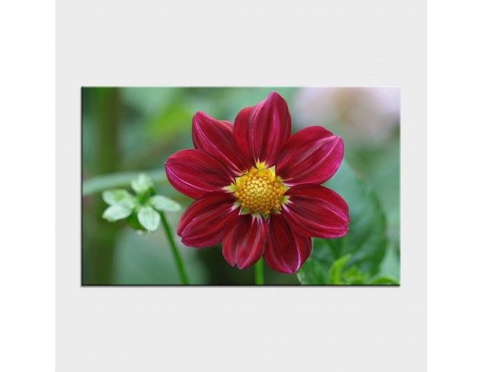 Tablouri cu flori cod flo-33
