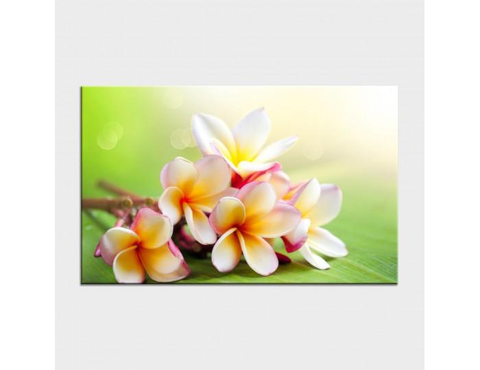 Tablouri cu flori cod flo-38