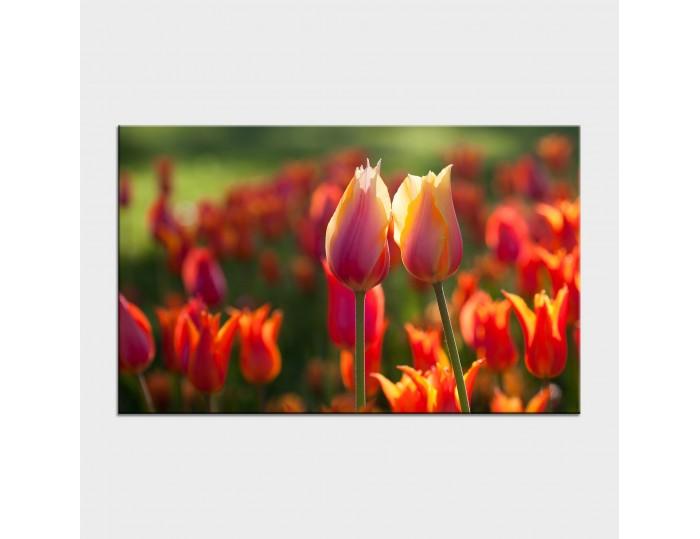 Tablouri cu flori cod flo-40