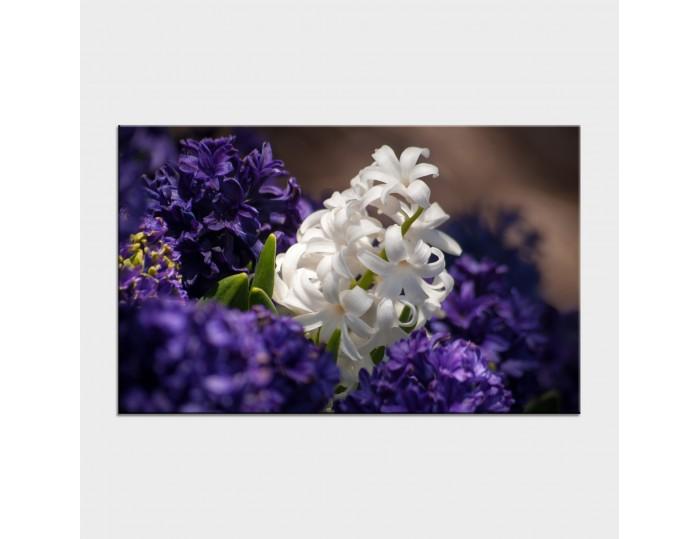 Tablouri cu flori cod flo-47