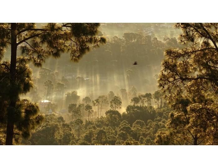 Tablou canvas peisaj cod 0045